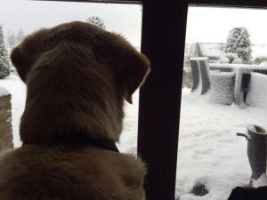 boy kijktnaar sneeuw