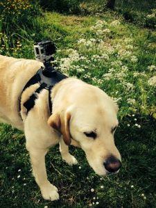 boy camera