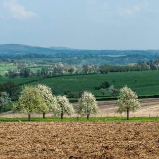 Nederland-Heuvelland-Epen-192*307 -bloesembomen in de Limburgse heuvels bij Sippenaeken, Terziet - © Fotografie George Burggraaff