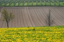Nederland-Heuvelland-Margraten-185*314 -ingezaaide akker - © Fotografie George Burggraaff