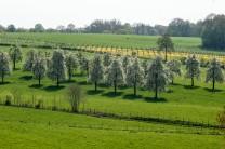Nederland-Heuvelland-Berg en Terblijt-182*318 -bloesemboomgaard bij Koelboschgrubbe - © Fotografie George Burggraaff